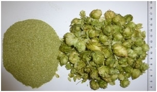 Hop cones before and after the comminution