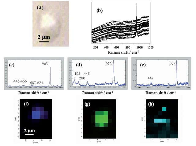 Raman imaging of lead containing particles emitted in the atmosphere by lead smelter facility. (a) optical image; (b) spectra of the 80 pixels of the image; Resolved Raman spectra of (c) PbSO4; (d) PbO.PbSO4; (e) (NH4)2SO4; Raman images of (f) PbSO4; (g) PbO.PbSO4; (h) (NH4)2SO4.