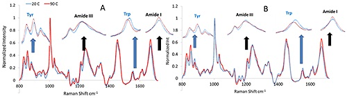Representative Raman spectra for monoclonal antibody (A) and its modified version (B) before and after thermal stress.
