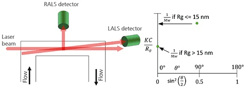 A. Schematic of a RALS/LALS hybrid detector showing the flow passing via the flow cell. B. When using RALS/LALS, the Debye plot is reduced to two points where the RALS value is used to maximize sensitivity for isotropic scatterers.