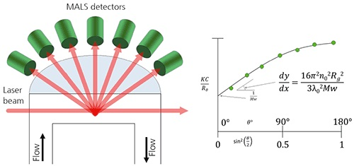 A. Schematic of a MALS detector showing the flow passing through the flow cell. B. When using MALS, the Debye plot is completed and extrapolated back to 0°.