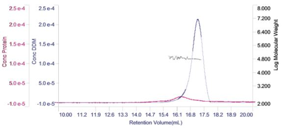 Derived chromatogram showing the concentration of protein (purple) and DDM (blue). Measured molecular weight is plotted across the two peaks.