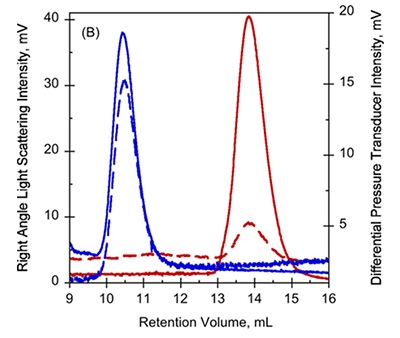 A. UV-absorption (plain curves) and deflection refractometer (dotted curves) chromatograms of apo-RD and holo-RD. B. right angle light scattering (plain curves) and differential pressure chromatograms (dotted curves) of apo-RD and holo-RD.