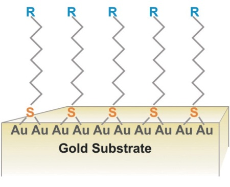 Self assembled monolayer on a gold substrate, (in this case R = C5H9).