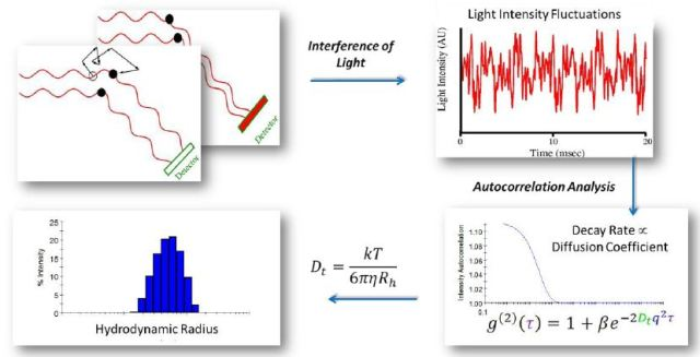 Autocorrelation analysis is the mathematical transformation linking light intensity fluctuations to the diffusion coefficient. Following autocorrelation, DYNAMICS converts the diffusion coefficients to size.