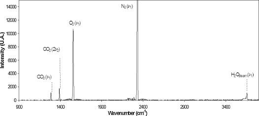A typical Raman spectrum measured at the site in this study.