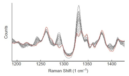 Baseline-corrected Raman spectra of tablets at different stages of coating.