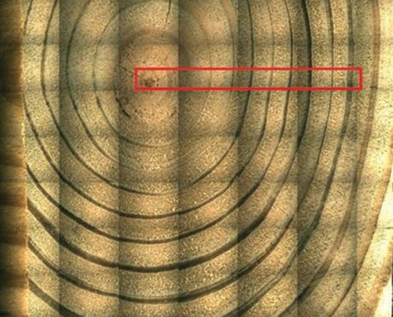 Montage image of wood cross-section sample, with mapping area highlighted in red. The wood sample has been treated with a copper micro-particle preservative.