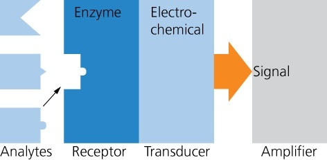 General structure of a biosensor. Sensors by IST AG use enzymes to detect glucose, lactate, glutamine and glutamate. The transducer principle is electrochemical, producing a current as output signal (amperometric).