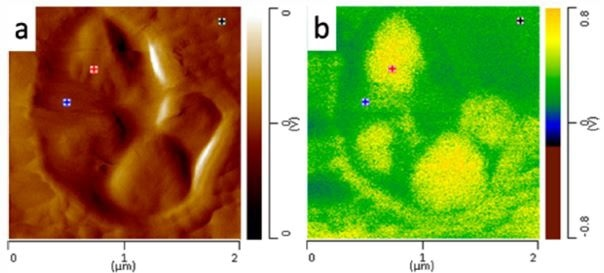 (a) AFM height image of nanoscale core domains and (b) AFM-IR image of domains at 1378 cm-1.