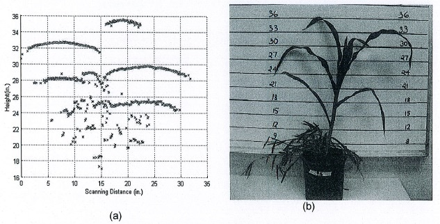 (a) Example scatter plot of leaf height estimates from ultrasonic scans as a corn plant in photo (b) was scanned from left to right.
