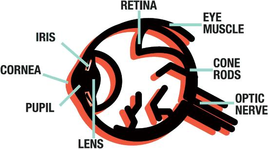 a bird eyes view pdf photopic response