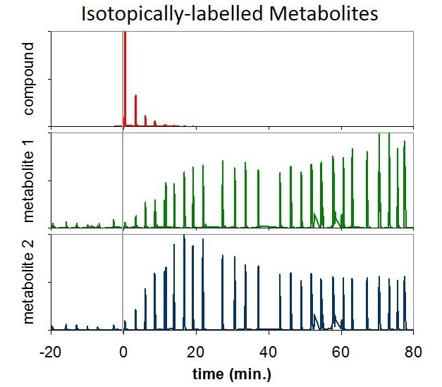 Two isotopically labeled metabolites (green, blue) with individual variations over time, which arise as a result of the ingestion of a labeled compound (red).