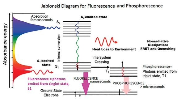 Fluorescence Spectroscopy Applications And Principles