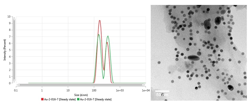 Intensity size distribution (left) as measured by MADLS and TEM (right) of Au-2-016-7