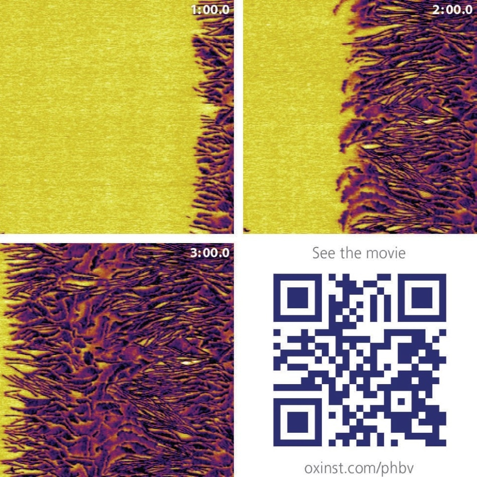 PHB/V spherulite crystallization – Tapping mode phase images of a polyhydroxybutyrate-co-valerate (PHB/V) spherulite crystallizing at room temperature over a period of three minutes. Scan size 1.5 μm. The scan rate of 40 Hz, or approximately 10 seconds per frame, allows clear visualization of the crystallization process. Imaged with the Cypher AFM. Sample courtesy of the University of Sheffield.