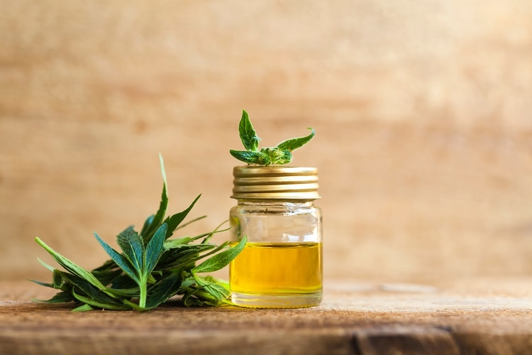 Using Short-Path Distillation to Extract CBD Oil From Cannabis