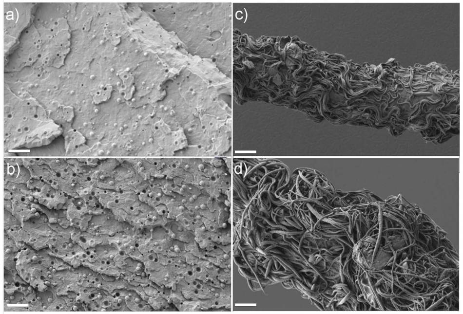 SEM images. (a), and (b): fractured surfaces of as-extruded samples with 6wt.% and 10wt.% of PTT respectively. (c), and (d): etched surfaces of one spun blend filament containing 6wt.% and 10wt.% of PTT respectively. The scale bar is 10 μm.