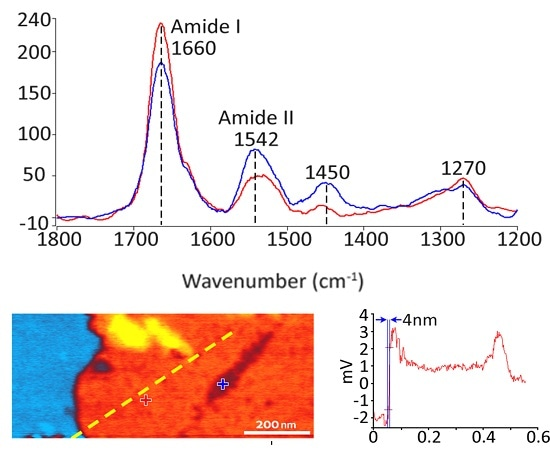 Tapping AFM-IR spectra and absorbance images of a 5-nm-thick film of Halobacterium salinarum (purple membrane) deposited on a template-stripped Au substrate.