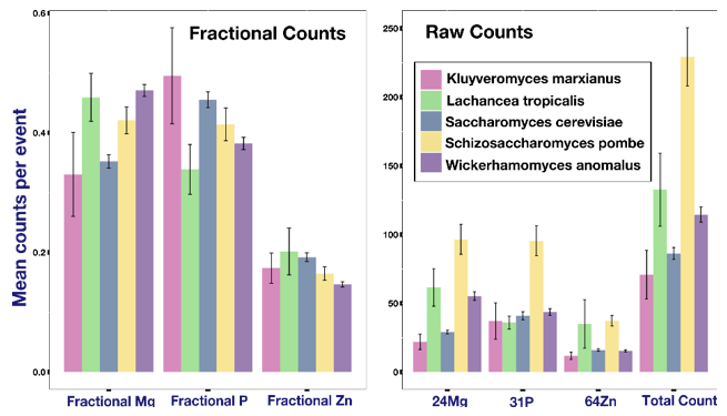 Left: Fractional mean counts of different elements in single cells (defined as counts of element X/Sum of counts of all elements). Right: Mean counts of different elements in single cells from different cell species. The difference in mean and fractional counts indicate the difference in element concentrations between different cell species.