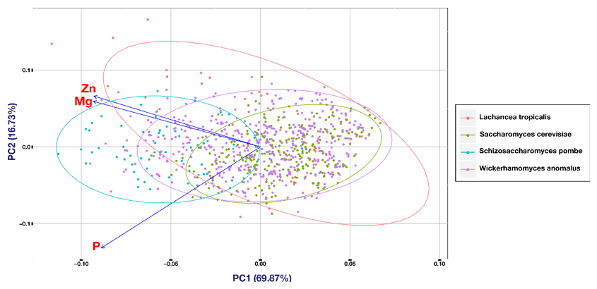 PCA plot for different species. The analysis shows no clear separation of cell populations from different species. There was just a minor difference between S. cerevisiae and S. pombe and S. pombe and W. anomalus detected.