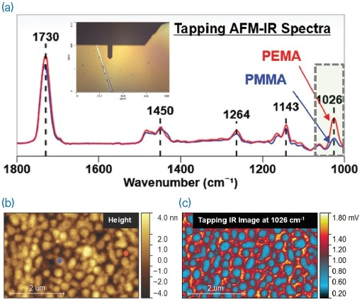 (a) Tapping AFM-IR spectra of PMMA and PEMA; (b) AFM height image showing the locations where the correspondingly colored tapping AFM-IR spectra were collected; (c) tapping AFM-IR image collected with the QCL tuned to 1026 cm-1. Sample courtesy of the University of Minnesota.