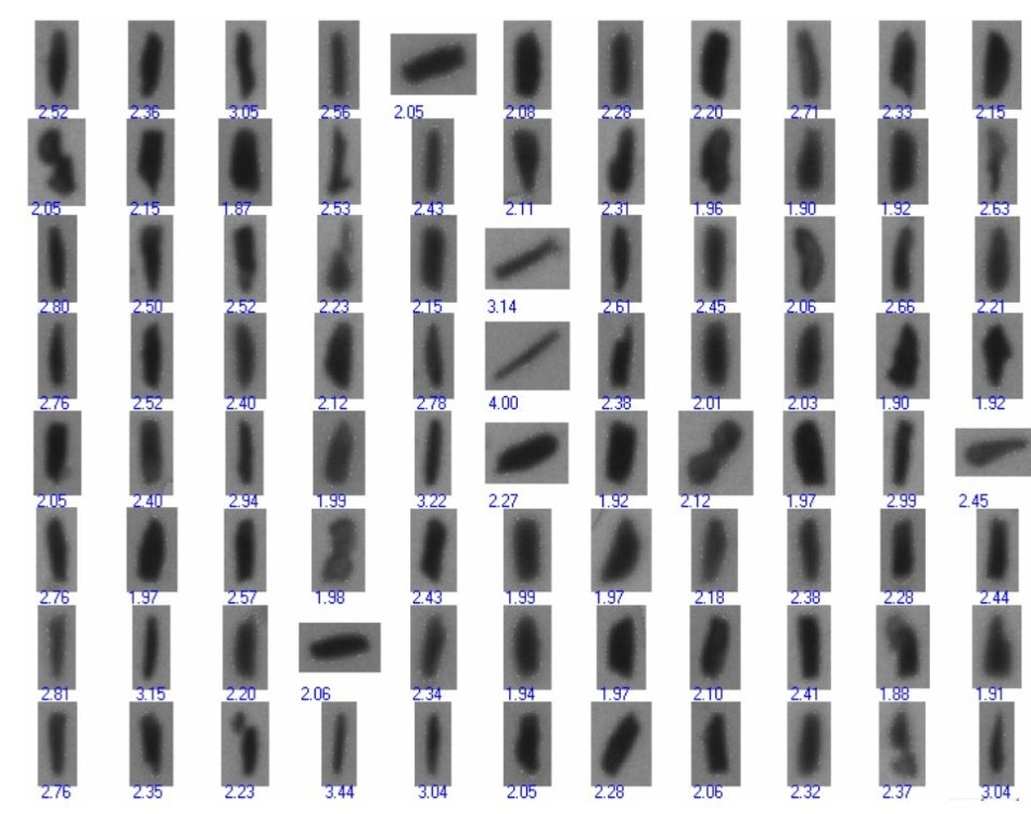 A sampling of the thumbnails of the 1,591 particles found to have an aspect ratio greater than 1.9.