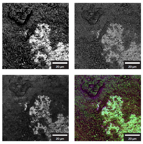 Images of the natural oxidation of the metal surface collected with different TESCAN CLARA BSE detectors. LE BSE (wide-angle), Multidetector (mid-angle), Axial (narrow-angle) and color-coded image where each angle is represented by a color.