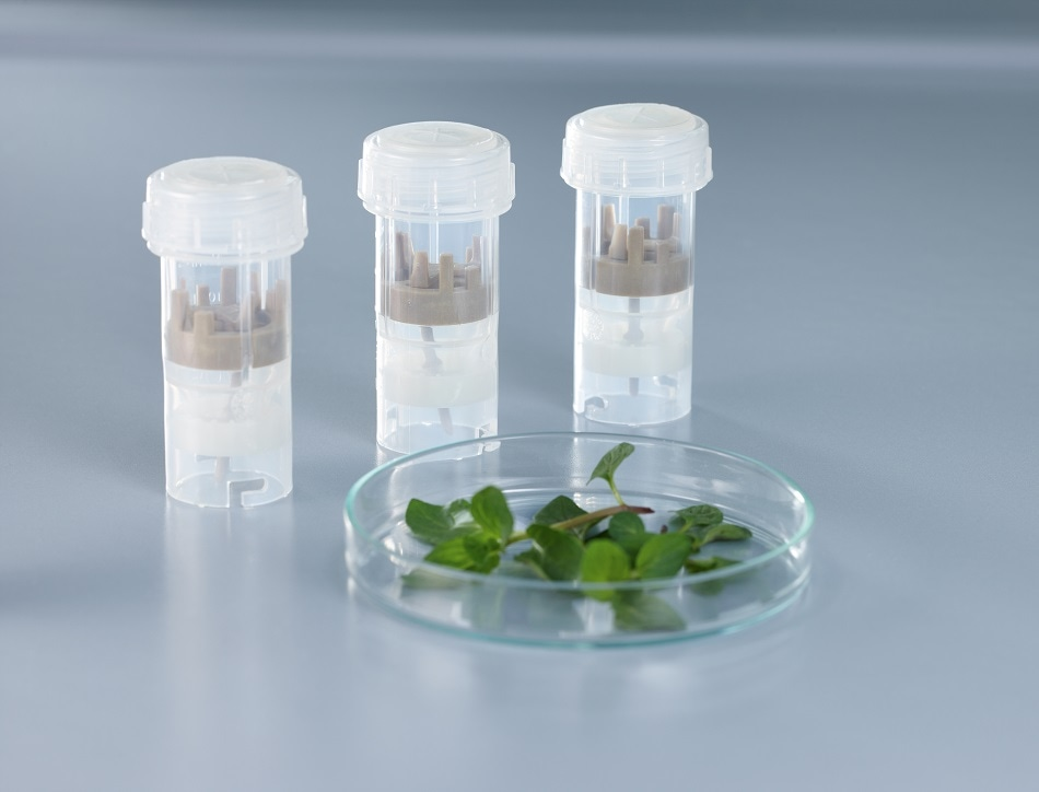 Homogenization of mint leaves with ensuing sampling process.