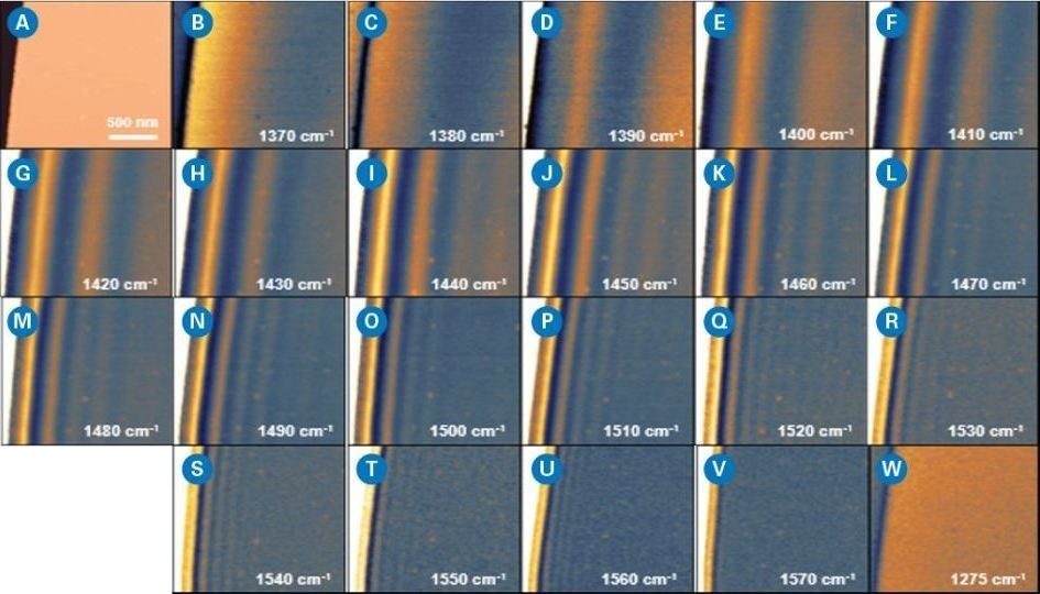 Near-field optical images on a hBN nanoflake at different wavelengths undernarrow linewidth mode. Each image is 1.5 µm x 1.5 µm with 10 nm pixel spacing: a) AFM height; b-w) near-field images at different wavenumbers, showing a systematic variation of surface phonon polariton (SPP) waves pattern.