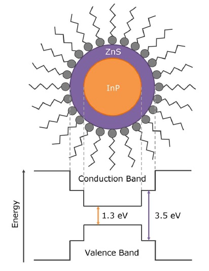 Structure and band energy diagram of core-shell InP/ZnS quantum dots.