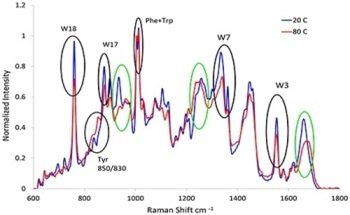 The Determination of Protein Structure and Stability by Combining Dynamic Light Scattering and Raman Spectroscopy