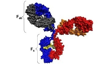 An Introduction to Proteins: Their Composition and Structure, and How Size Molecular Weight and Zeta Potential Measurements can be Applied