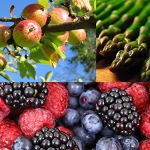 Food Texture Testing in the Fruit and Vegetable Sector