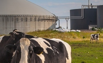 Researchers Lay to Rest Methane-Production Debate