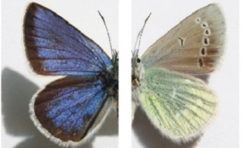Using Spectroscopy to Identify and Classify Butterfly Types and Wing Patterns