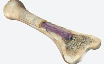 Advanced Mechanical Surface Testing of Bone Using Nanoindentation
