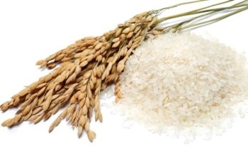 Using FT-NIR Spectroscopy to Analyse Rice