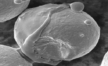 Developing Corrosion Inhibitors – Using SEM to Investigate Corrosion