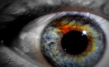 How Does the Human Eye Perceive Light? Photopic and Scotopic Vision