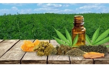 Cannabis Extraction Methods - Isolating Useful Compounds