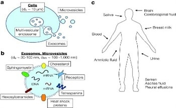 A Comprehensive View of the Characterisation of Exosomes