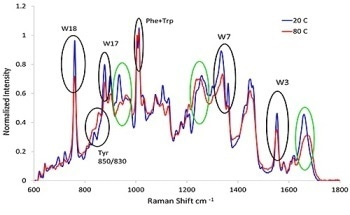 Using Raman Spectroscopy to Understand the Conformational Stability of Protein Therapeutics