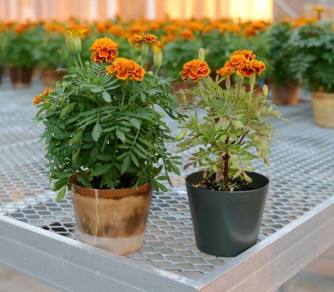 Bioplastic Plant Pots Get the Better of Petroleum-Based Plastic Pots
