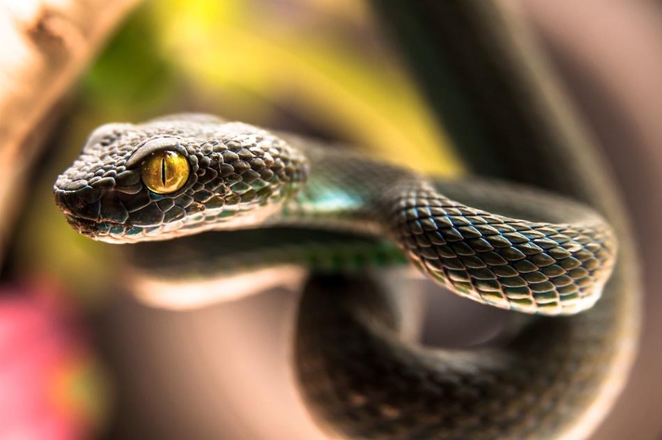 Heat-sensitive artificial skin mimics viper organ