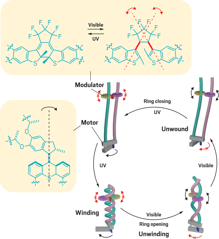 Light-Powered Molecular System Winds and Unwinds Polymer Chains