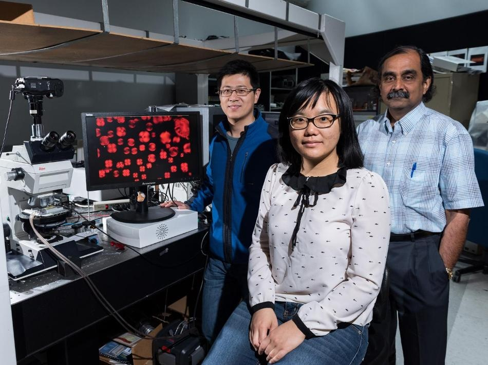 Unexpected Twist in Confined Liquid Crystals may Pave Way for New Sensors