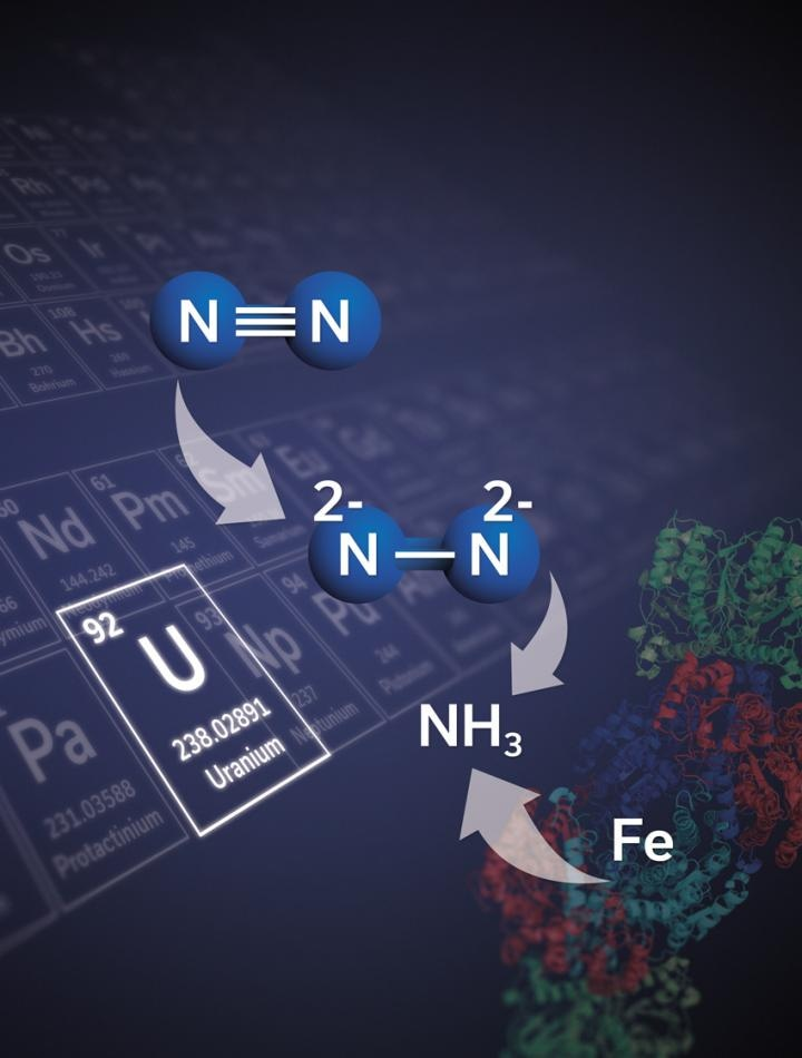 New Uranium-Based Compound can Allow Nitrogen Fixation to Take Place in Ambient Atmosphere