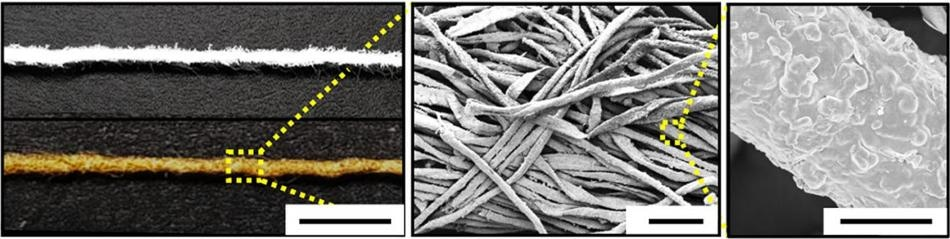 Gold-Covered, Cotton-Based Electrodes Could Improve Efficiency of Biofuel Cells