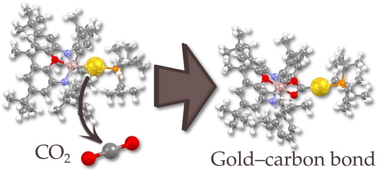 Collaborative Research Effort Results in the Discovery of Nucleophilic Gold Compound